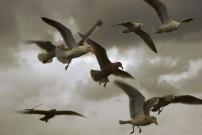 Seagulls.