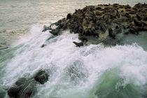 Seal Colony2.