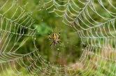 Spider2.