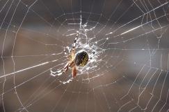Spider3.