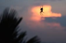 Spider4.