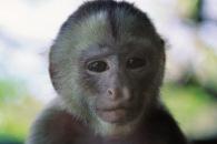 Squirrel Monkey2.