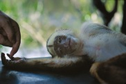 Squirrel Monkey3.