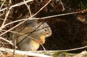 Squirrel2.