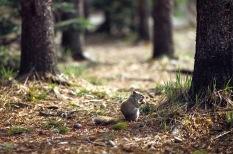 Squirrel3.