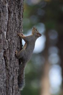 Squirrel4.
