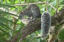 Squirrel5.