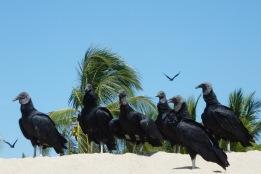 Vultures1.