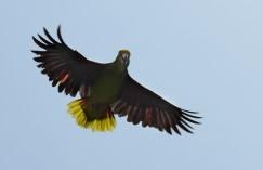 Parrot.1