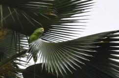 Parrot.4