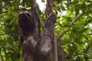 Sloth.13